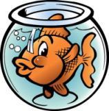 Что с аквариумом?
